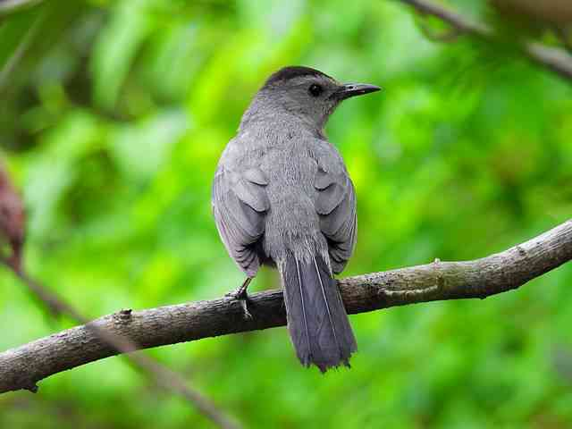 Bird (56)