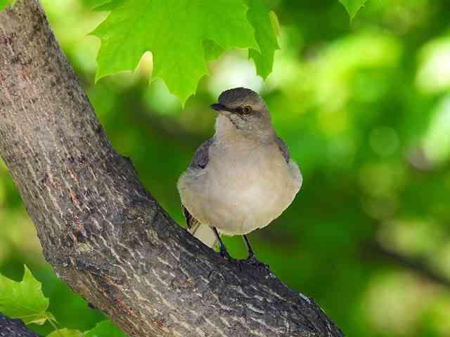 Bird (57)