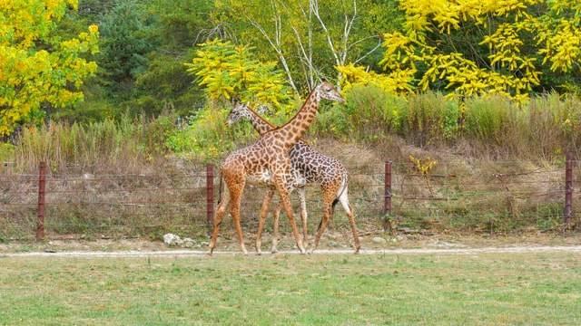 Franklin Park Zoo