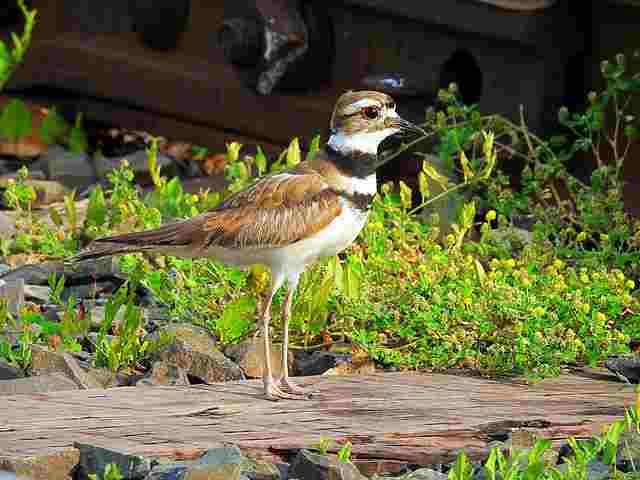 Bird (65)